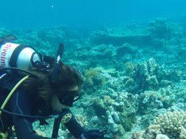 Coral Reef Studies